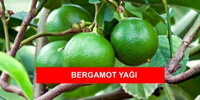 bergamot yagi