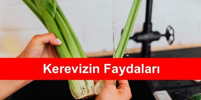 Kerevizin Faydalari